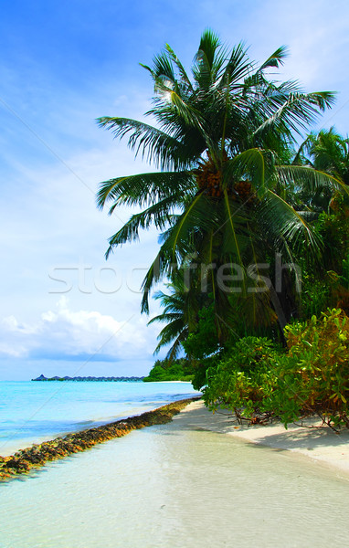 Stockfoto: Tropisch · strand · Maldiven · kokosnoot · palmen · opknoping · zee