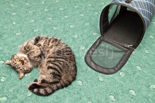 Katze Transport Käfig Hintergrund Sicherheit Kätzchen Stock foto © g215