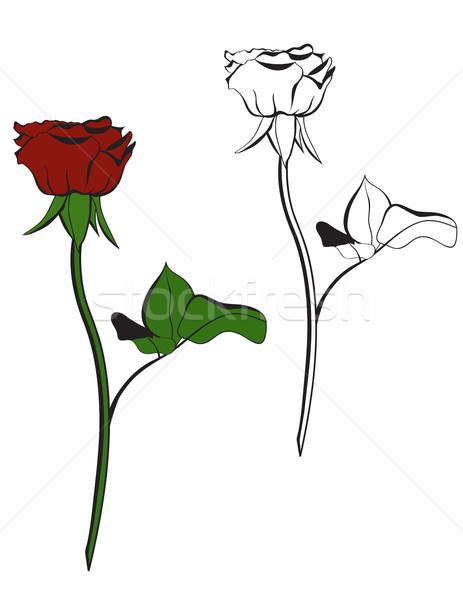 Kırmızı gül beyaz düğün sevmek gül dizayn Stok fotoğraf © g215
