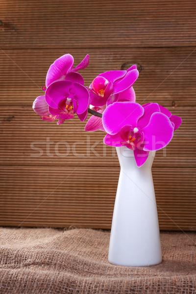 ピンク 蘭 素朴な 花 春 頭 ストックフォト © g215