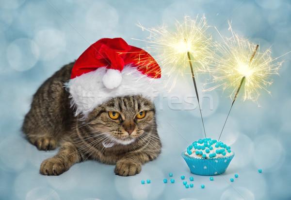 Christmas kat muffin grappig geschenk hoed Stockfoto © g215