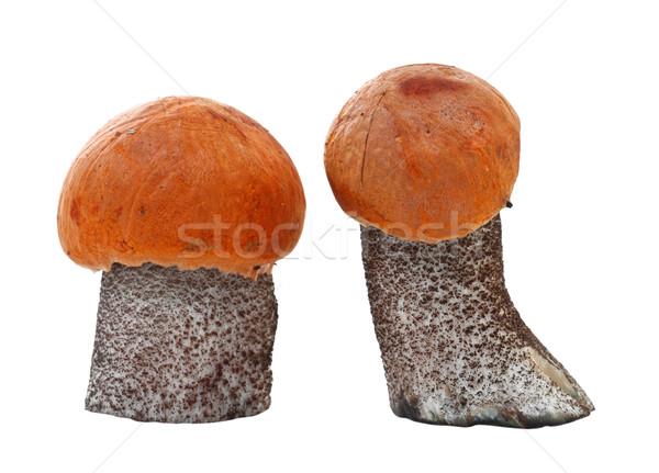 Vers oranje cap paddestoel geïsoleerd witte Stockfoto © g215