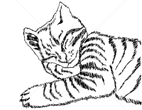 иллюстрация спальный кошки карандашом искусства расслабиться Сток-фото © g215