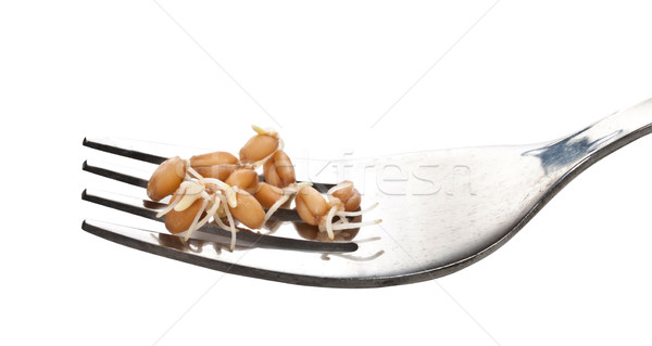 Sprouted wheat grains closeup on a fork. Stock photo © g215