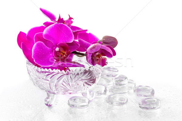 Pink orchid with dew and reflection Stock photo © g215