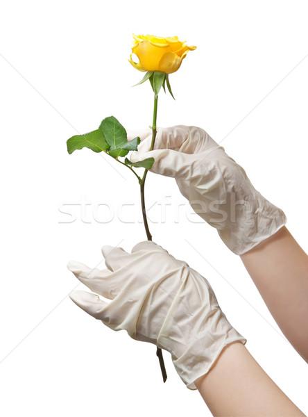 Mains médecin stérile gants rose Photo stock © g215