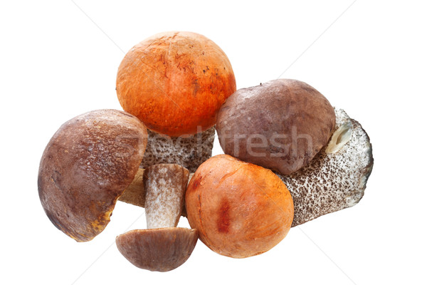 Fresh cap boletus, isolated on white background. Stock photo © g215