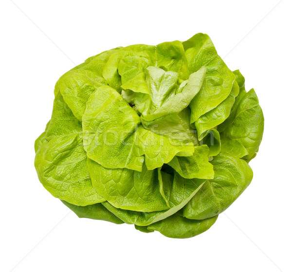 Head lettuce isolated on a white background Stock photo © g215