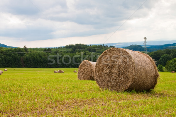 Rolls of straw in the field on a sunny day. Stock photo © g215