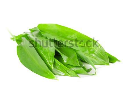 Levelek vad fokhagyma fehér tavasz zöldség Stock fotó © g215