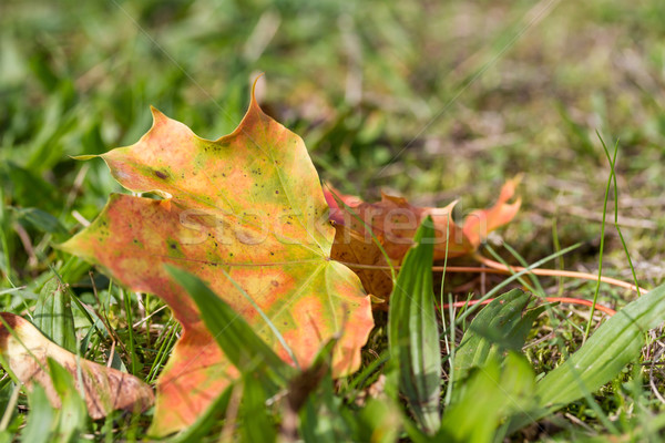 осень лист трава время парка цветами Сток-фото © g215