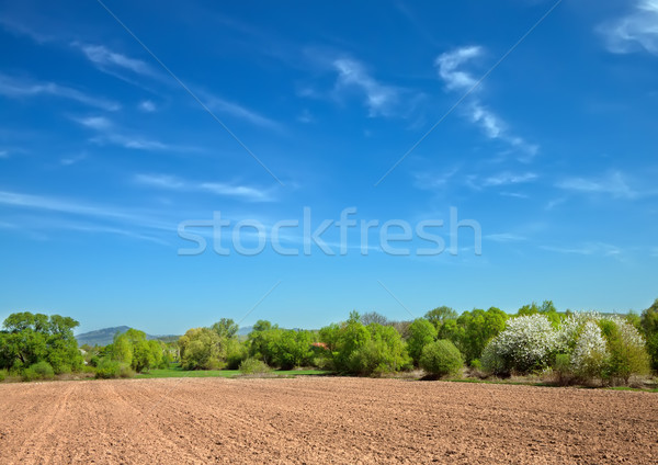 field for tillage  Stock photo © g215