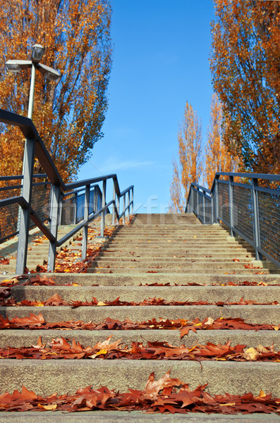 Stairs with autumn leaves on a sunny day. Stock photo © g215