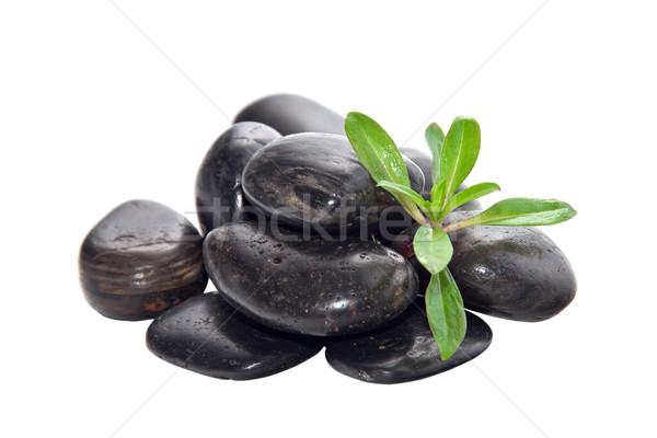 камней молодые зеленый растений дерево медицина Сток-фото © g215