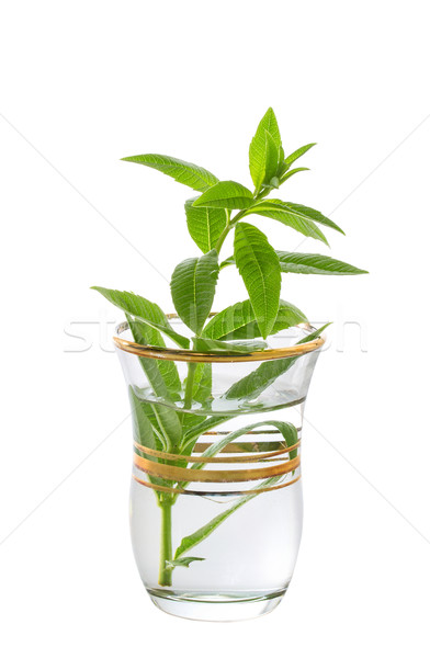 Sprig of mint in a glass Stock photo © g215