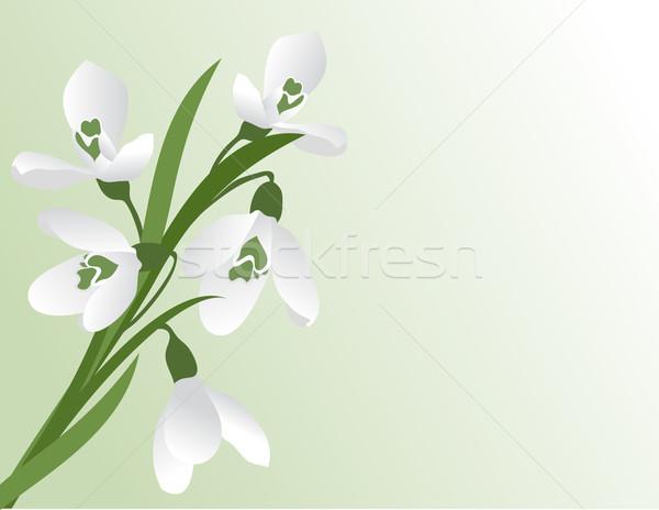 первый весны зеленый цвета подарок документа Сток-фото © g215