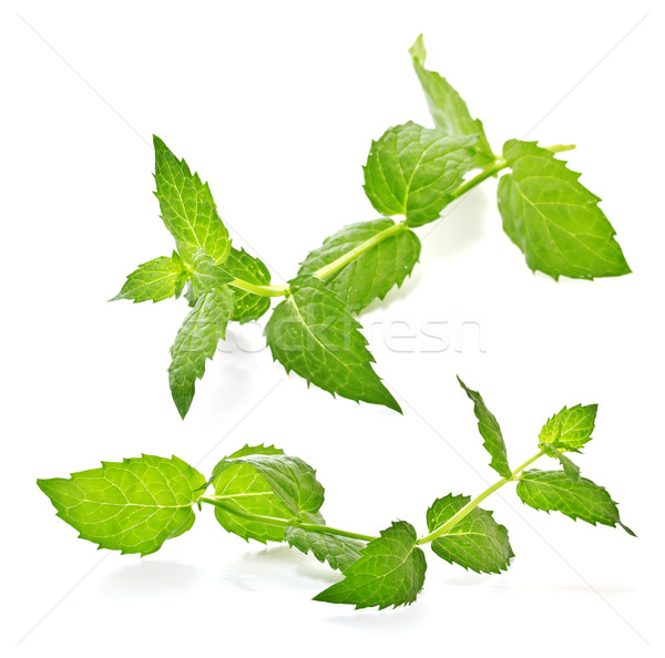 sprig of mint on a white background Stock photo © g215
