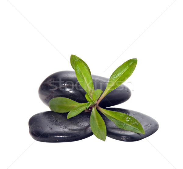 A handful of stones with the young green plants. Stock photo © g215