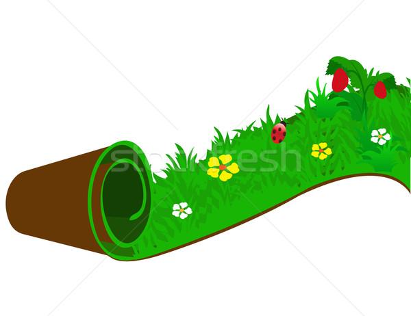 катиться трава природы красоту лет области Сток-фото © g215