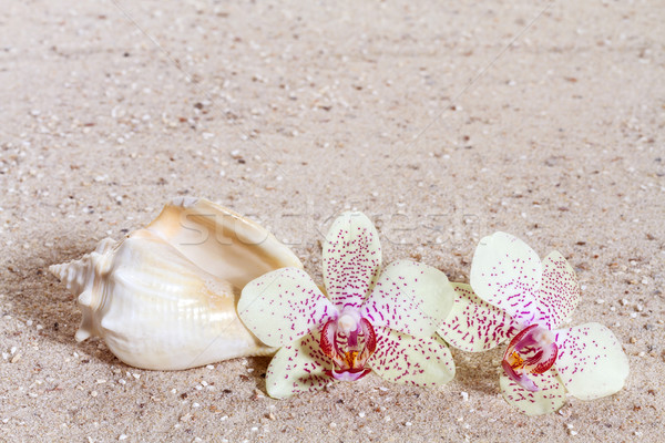 Orchid  in the sand  Stock photo © g215