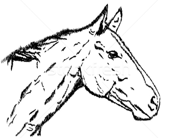 Illustration of a horse's head Stock photo © g215