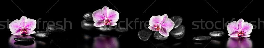 Horizontal panorama rose orchidées zen pierres Photo stock © g215