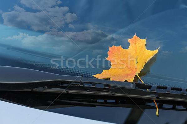 ősz levél autó szélvédő felhők város Stock fotó © g215