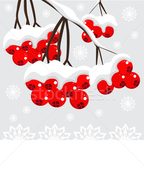 Winter background with red berries and snow Stock photo © g215