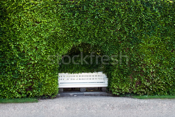 The bench, standing in a niche of the hedge. Stock photo © g215