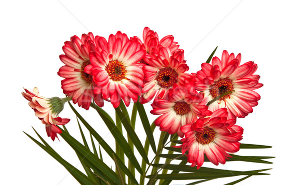 Bouquet of asters. Stock photo © g215