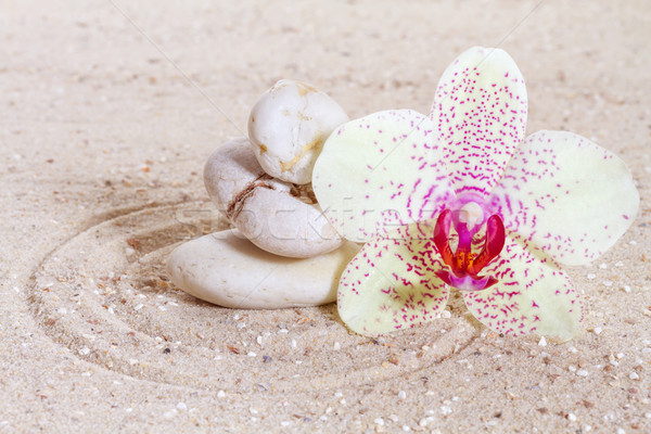 蘭 禅 石 砂 ビーチ 花 ストックフォト © g215