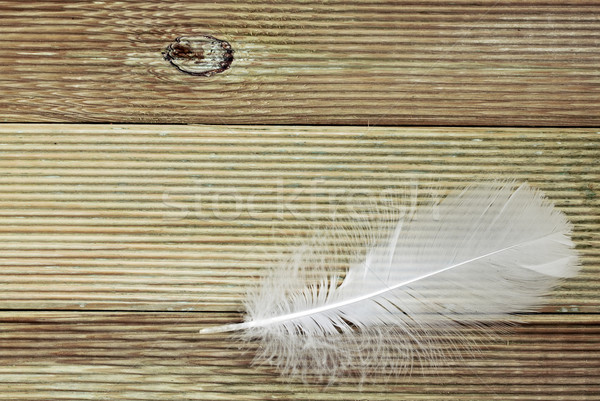 White feather on a board background Stock photo © g215