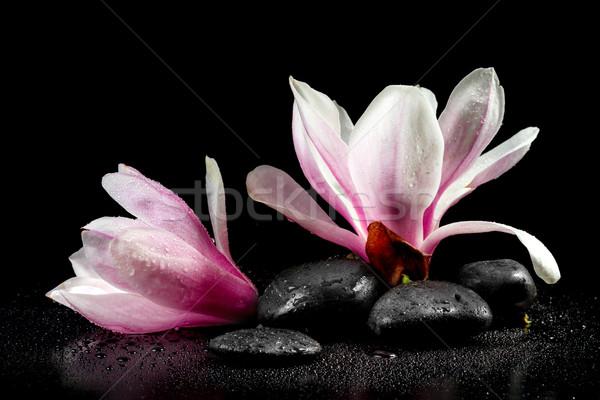 магнолия цветы zen камней черный цвета Сток-фото © g215