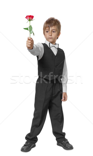 Boy in a tuxedo with a rose in hand. Isolate on white background Stock photo © g215