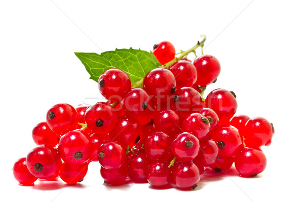 Red currants on a white background.  Stock photo © g215