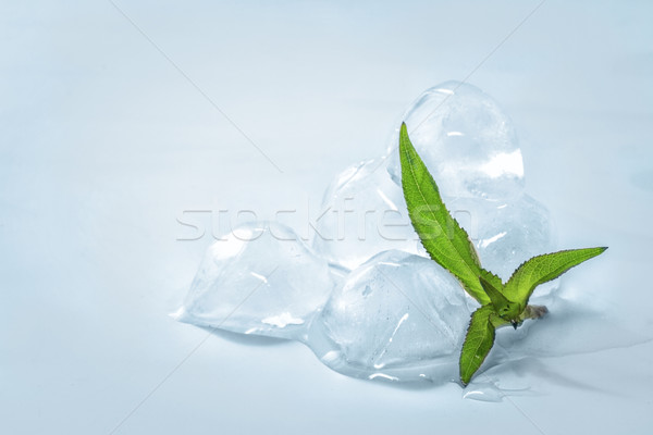 Ice cubes with mint leaves Stock photo © g215
