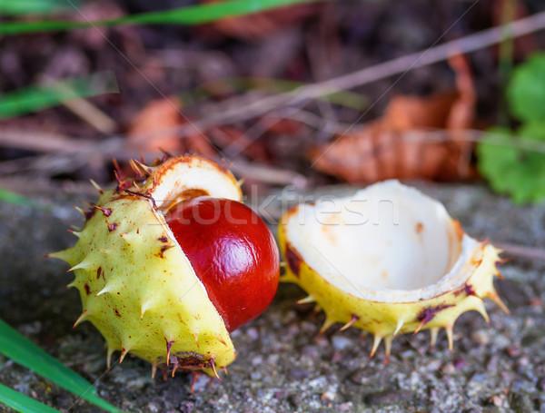 Kestane meyve gıda yaprakları sonbahar Stok fotoğraf © g215