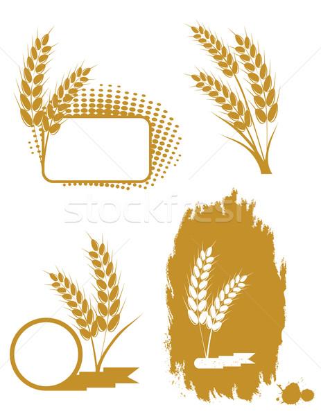 Ayarlamak kulaklar buğday yaz alan çiftlik Stok fotoğraf © g215