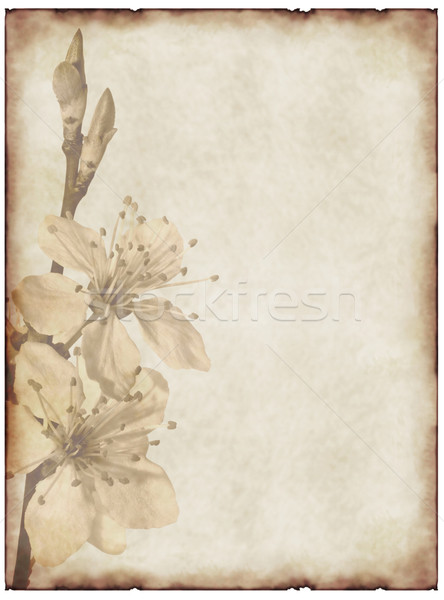 Eski kağıt kiraz çiçeği çiçek kâğıt dizayn boya Stok fotoğraf © g215