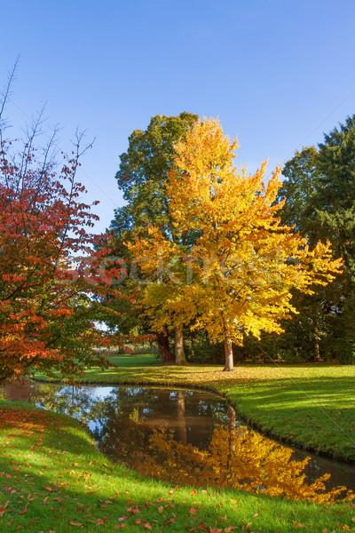 Outono parque verde urbano folhas vermelho Foto stock © g215