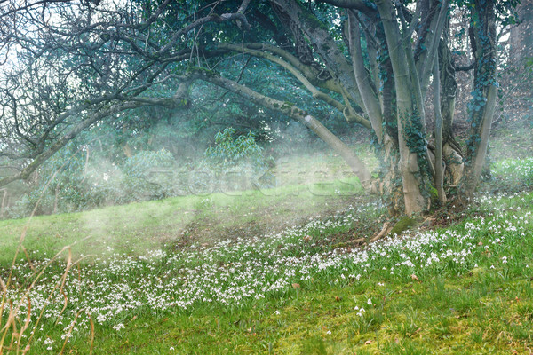 Tavasz tájkép legelő virág háttér nyár Stock fotó © g215