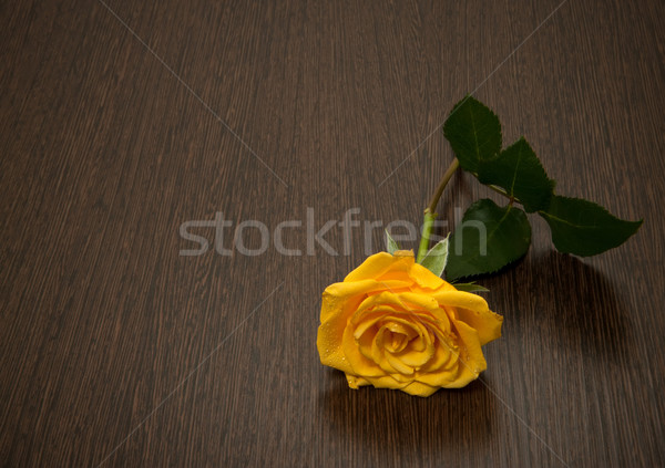 Yellow rose on a wooden table Stock photo © g215