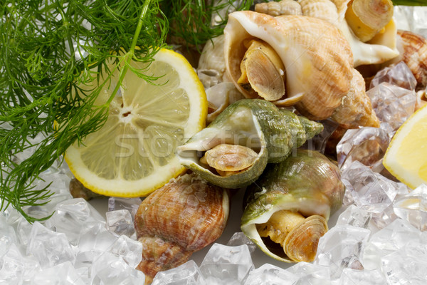 whelks with dill and lemon on ice  Stock photo © g215