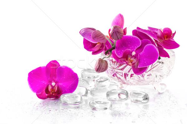 розовый орхидеи роса отражение цветок весны Сток-фото © g215