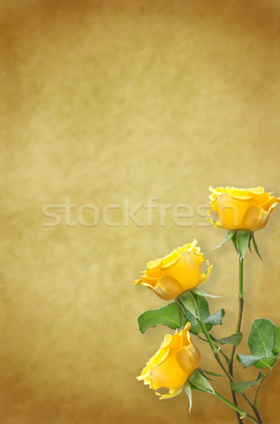 Vieux papier belle roses fleur rose nature Photo stock © g215