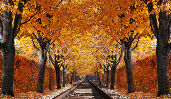 Abandoned railroad in autumn forest Stock photo © g215