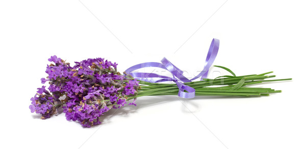 bunch of lavender on white background Stock photo © g215