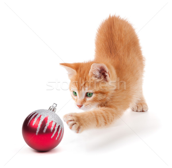 Stock photo: Cute Orange Kitten Playing with a Christmas Ornament on White