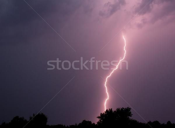 Bliksem staking bout onweersbui boom voorjaar Stockfoto © gabes1976