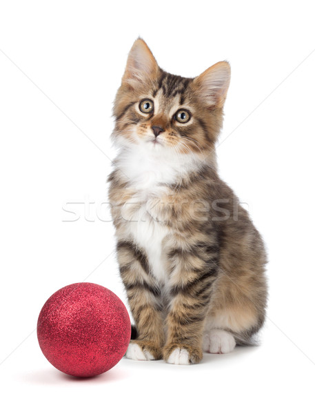 Cute kitten sitting next to a Christmas Ornament on a white back Stock photo © gabes1976